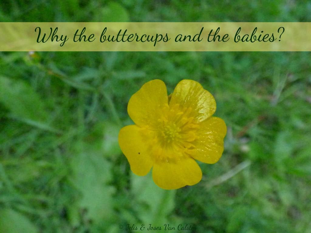 buttercupsandbabies