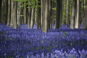 In het paarse toverbos